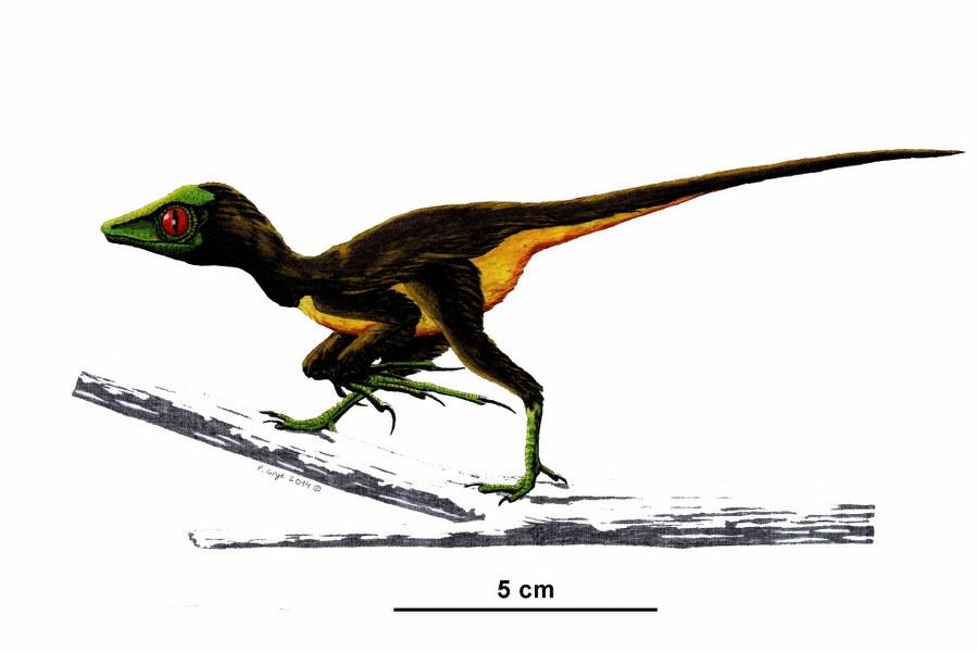 epidendrosaurus_899x600