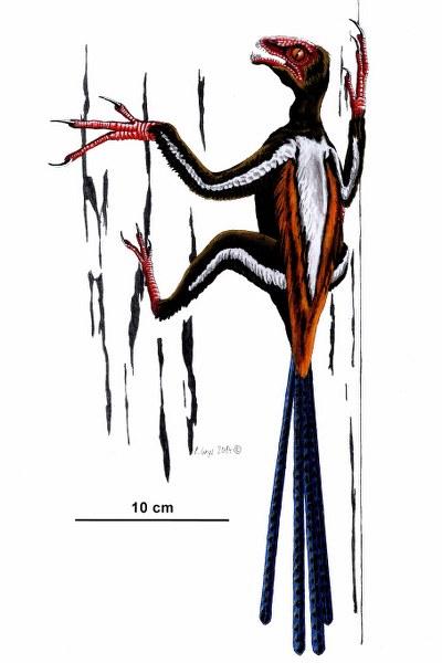 epidexipteryx_400x600