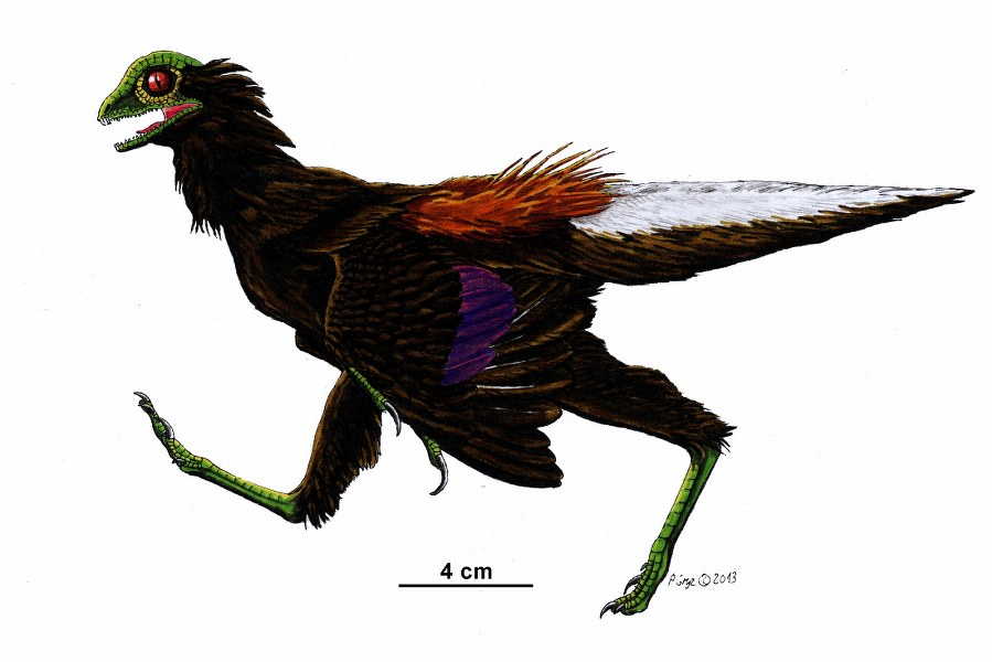 eosinopteryx_899x600