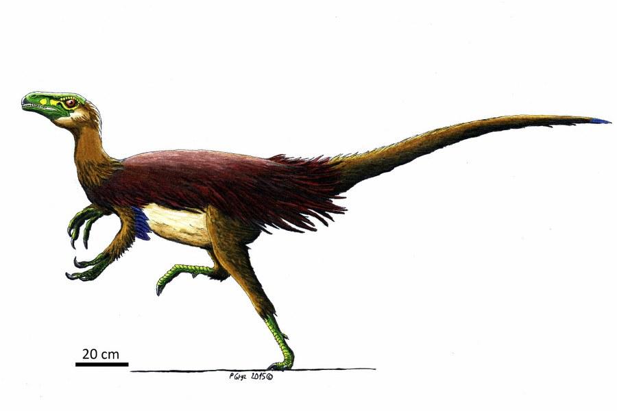 jainaghangozaurus2_900x600