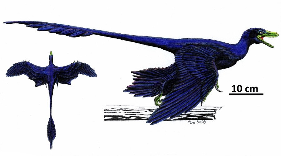 microraptor0012_900x500