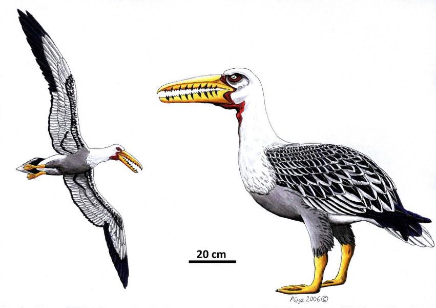 osteodontornis_851x600