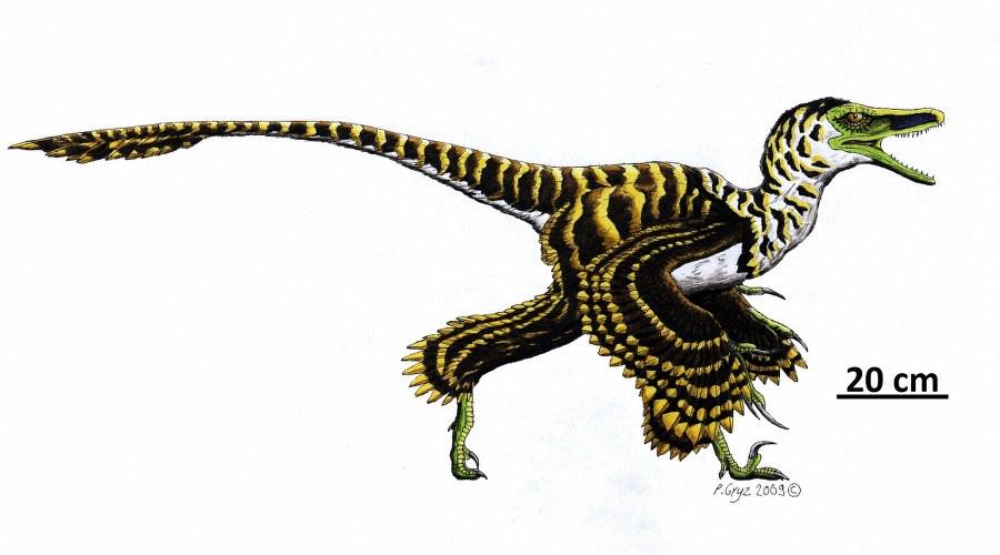sinornithosaurus_900x500