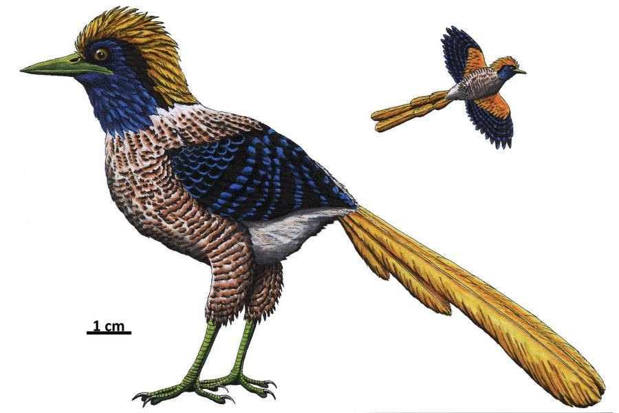 primozygodactylus_900x600