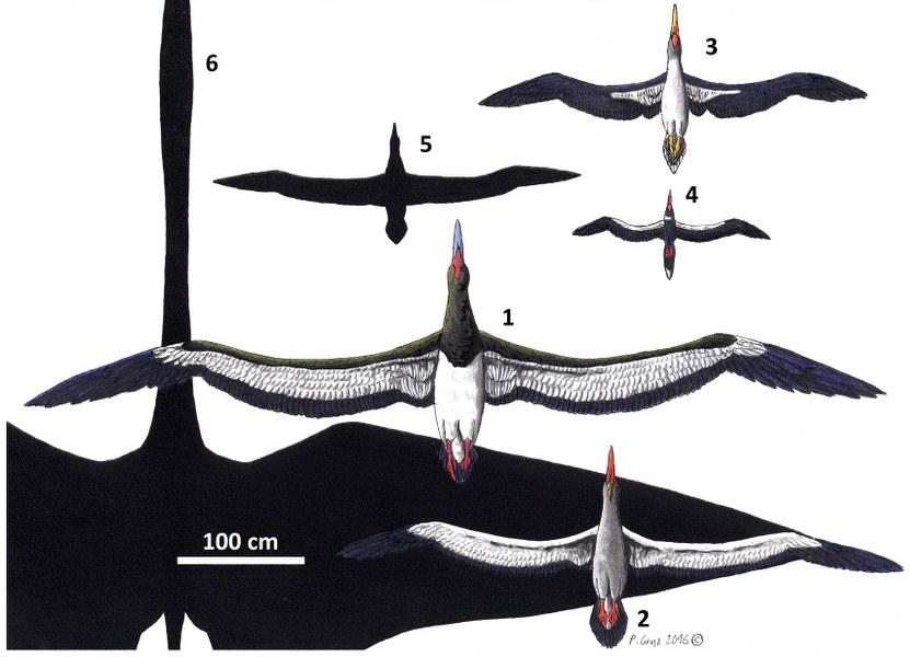 pelagornithidae_831x600