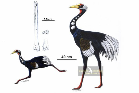 Ergilornis
