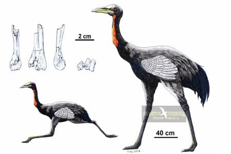 Urmiornis