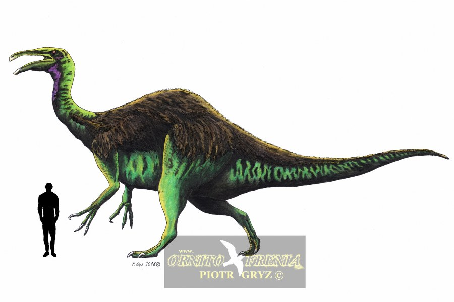 deinocheirus_mirificus_900x600