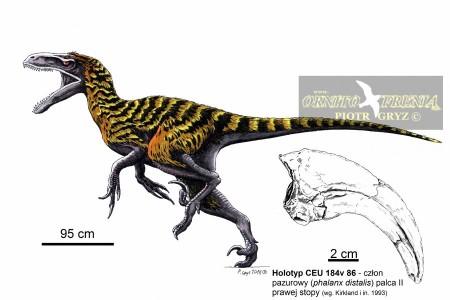 † Utahraptor